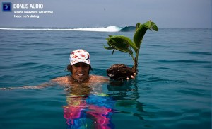 Rasta taking a break from saving the whales to save a stranded coconut...